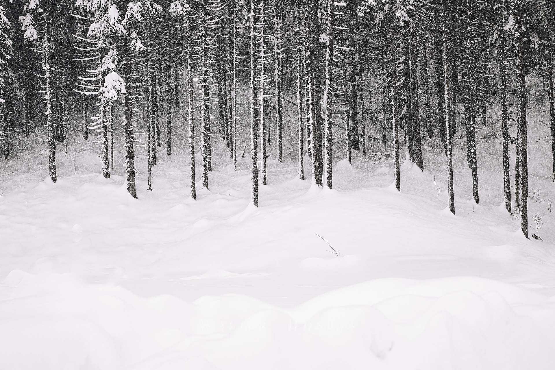 Lago di Carezza con la neve