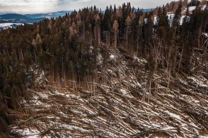 I boschi del Latemar dopo Vaia