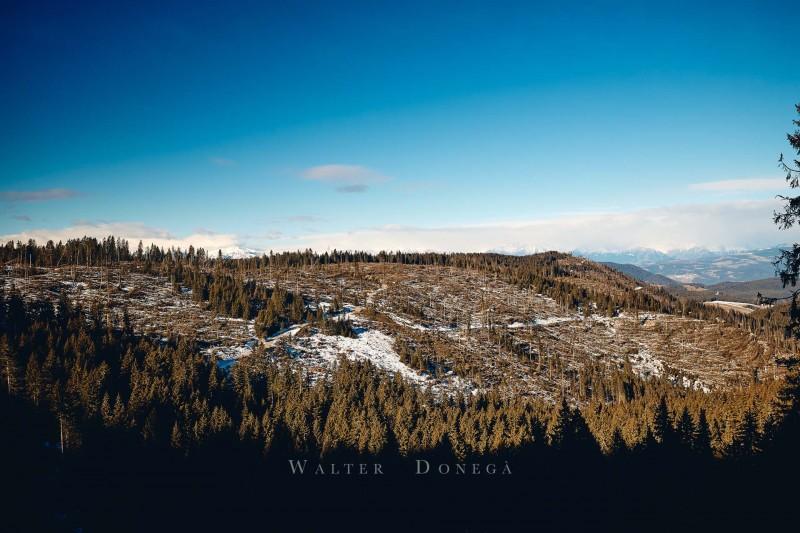 Boschi Obereggen e Passo Lavazè