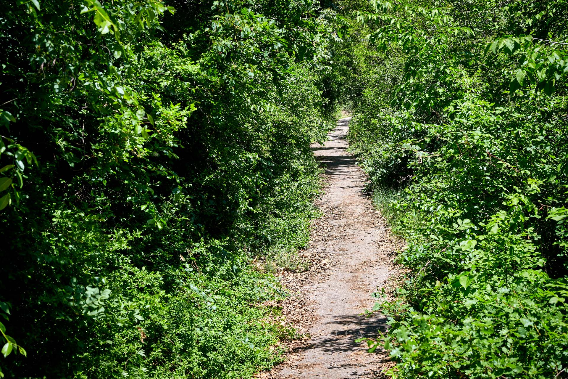 Renon sentiero 6